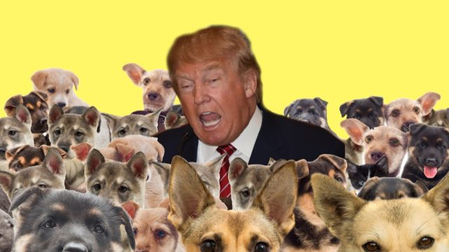 Dog Trump