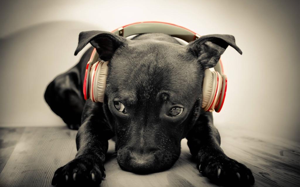 desktop backgrounds puppy headphones cute animals