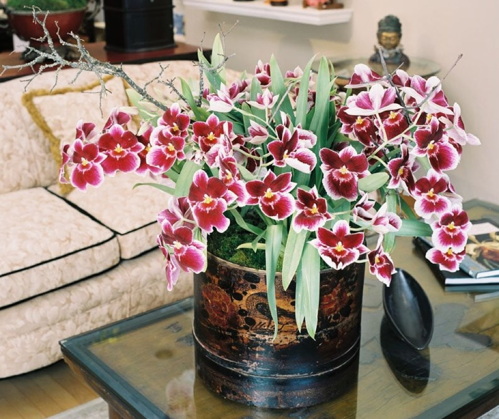 orchid flowers in a vase