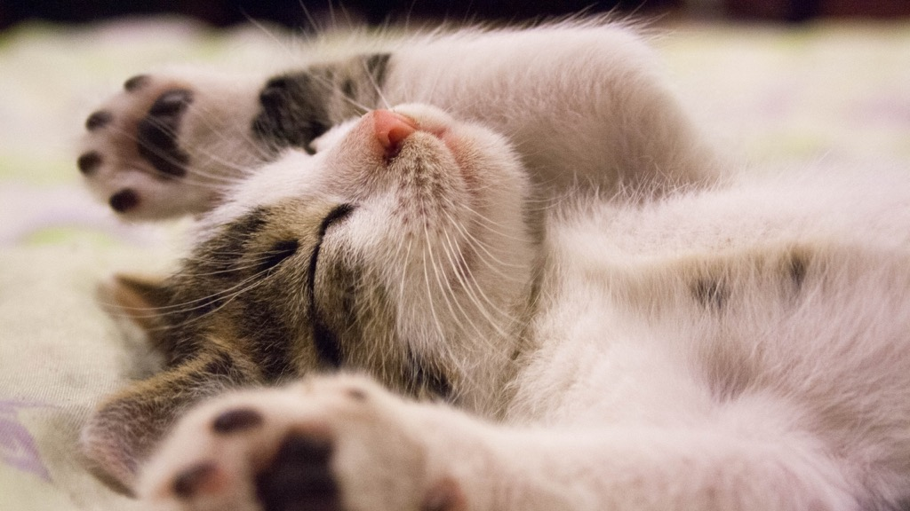 taking a nap will give you an instant energy boost