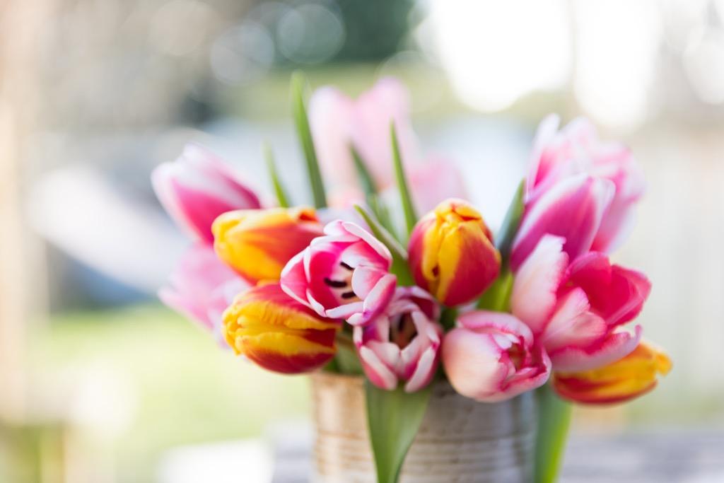romantic flowers tulips