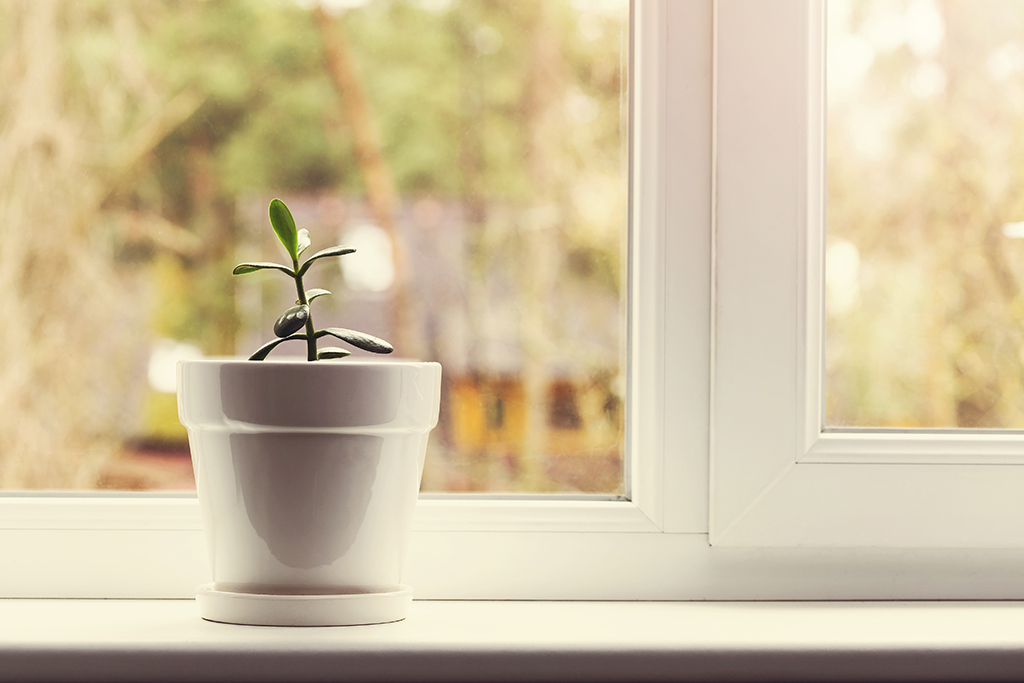 house plants can make you instantly happy