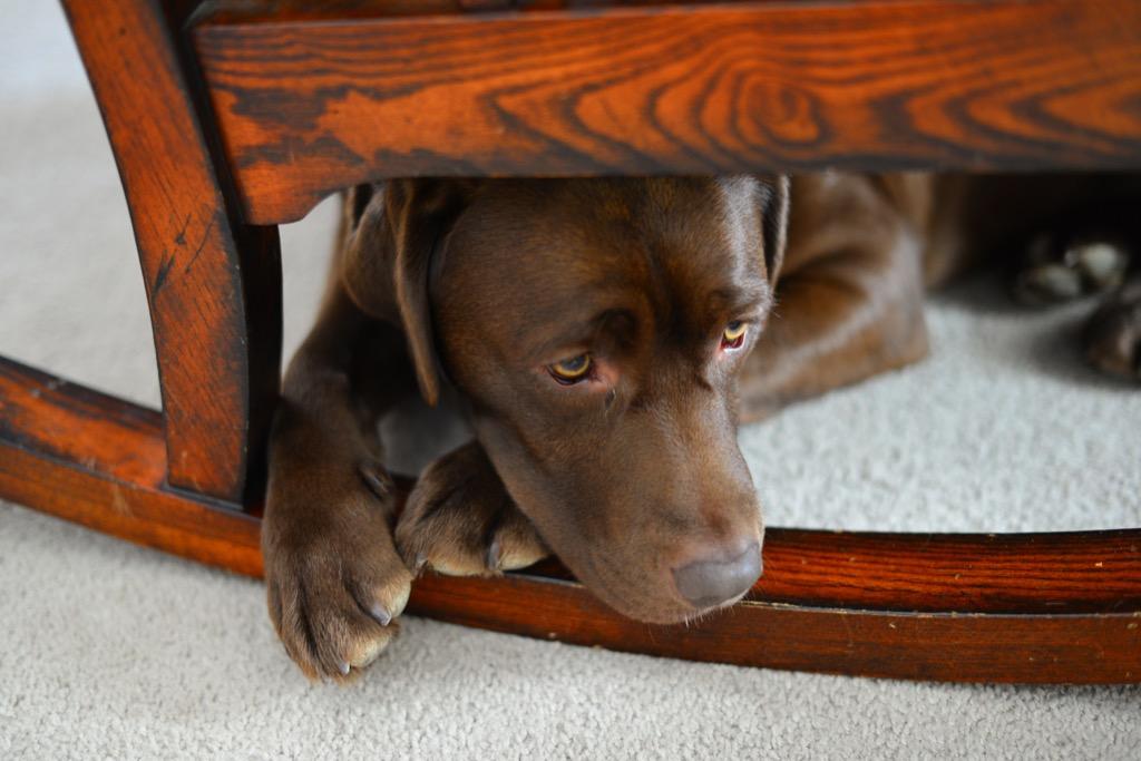 Shelter dog, anxious dog