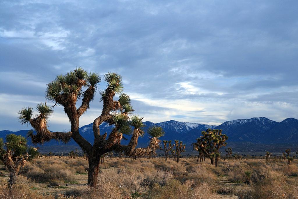 Palmdale, CA, desert, worst singles scenes