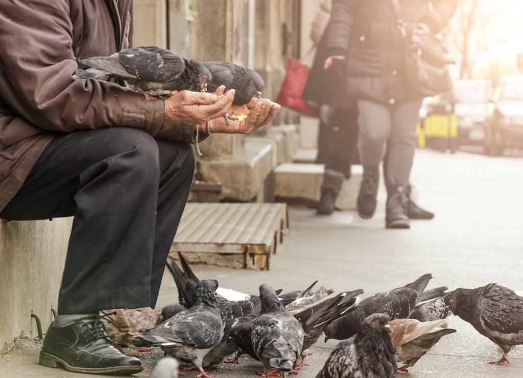 man feeding pigeons, top slang words in every state