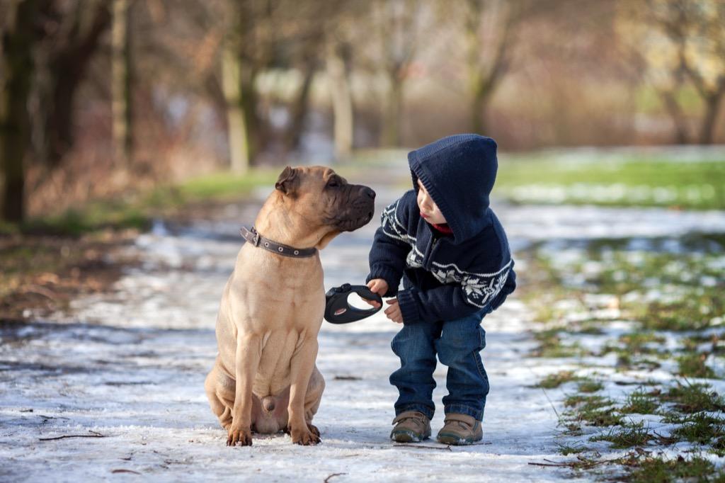 Shelter dog, shelter dog children