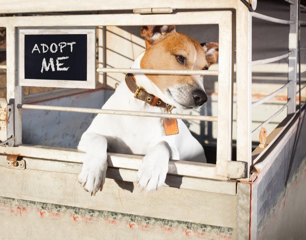 Shelter dog,