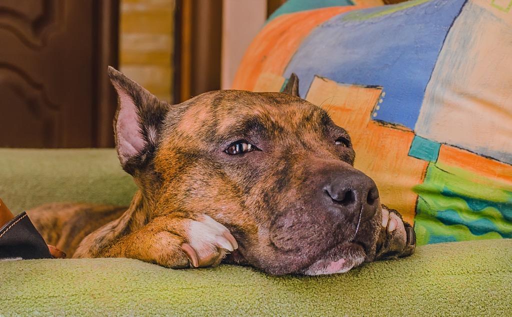 Shelter dog, sad dog