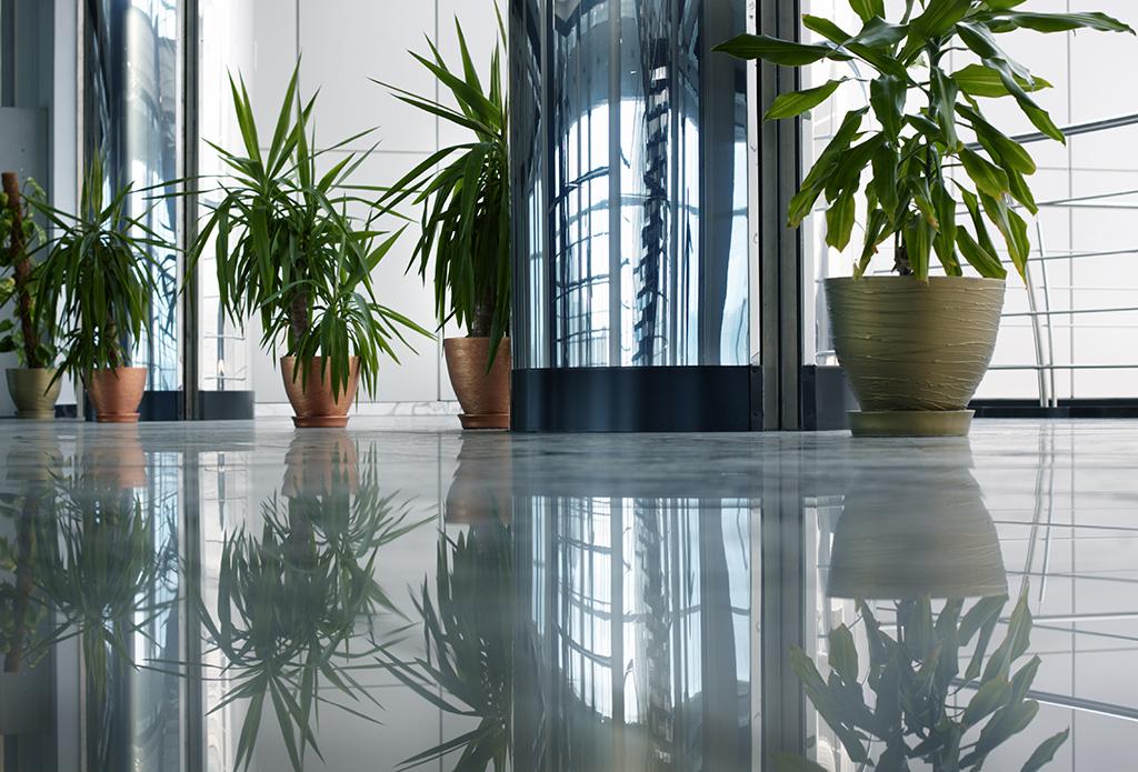 floor plants office