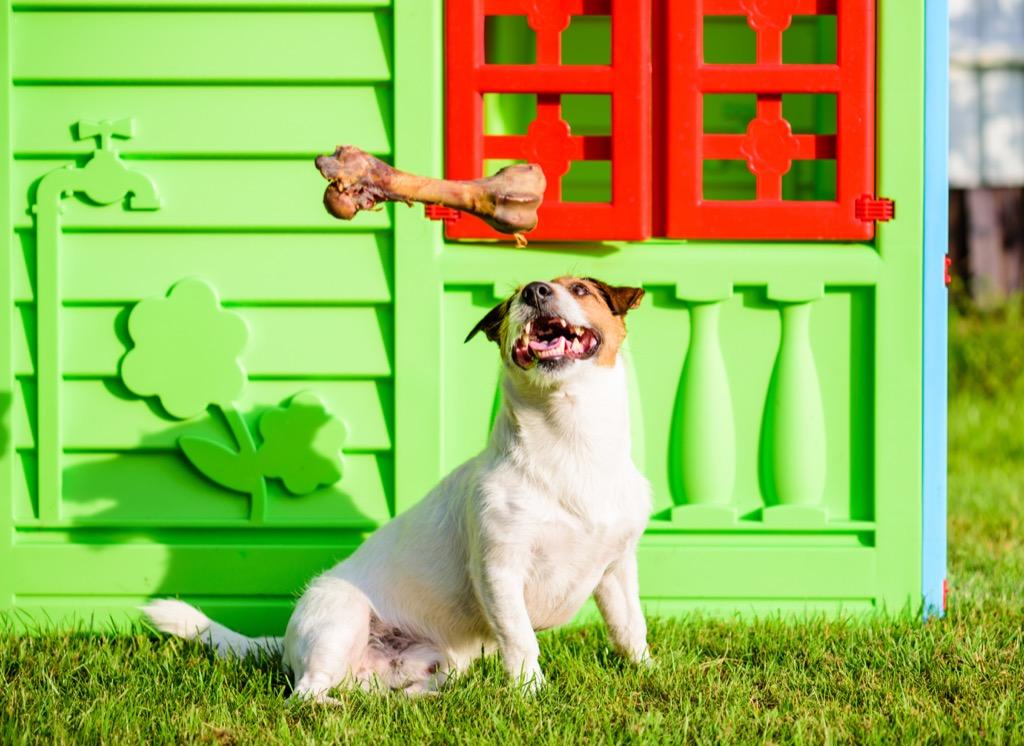 dog, dog house, celebrities not like us