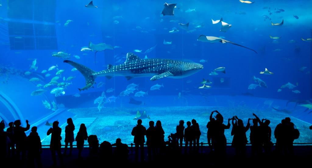 shark tank, unusual gifts