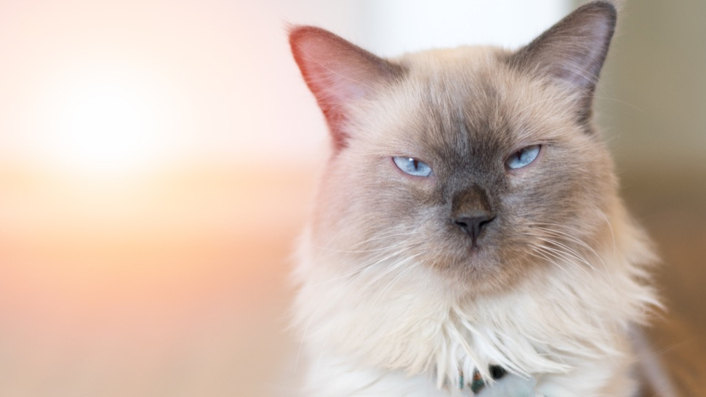 cats can be allergic to humans Random Obscure Facts