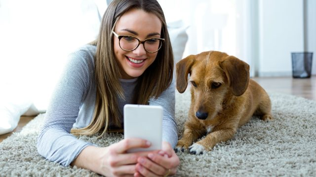 Dog and owner looking at phone