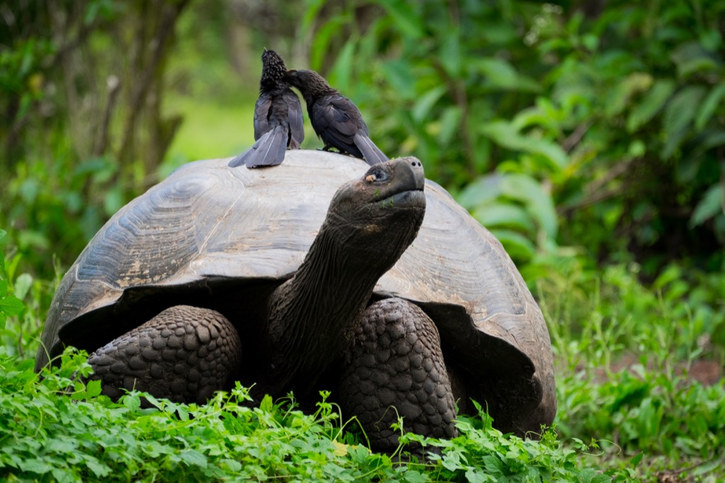 Tortoise 30 oldest animals on earth