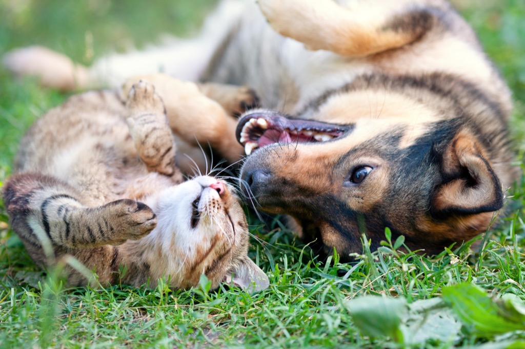 cat and dog outside in grass