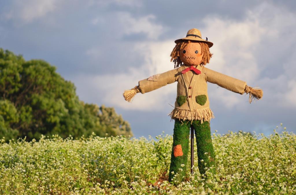 Scarecrow Wordplay Jokes
