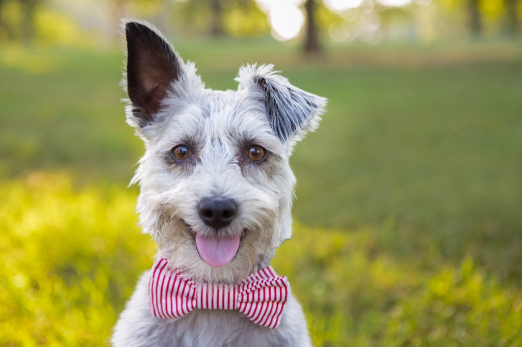 Bowties are not something a man should wear to work