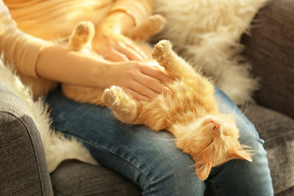 adopt a pet to keep away allergens cat