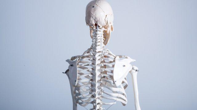 skeleton- skeleton jokes
