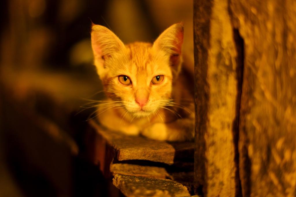 Orange cat outside