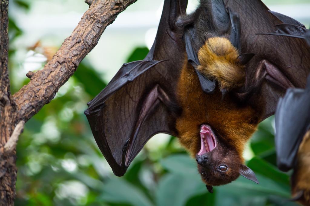 Bat Bogus 20th Century Facts