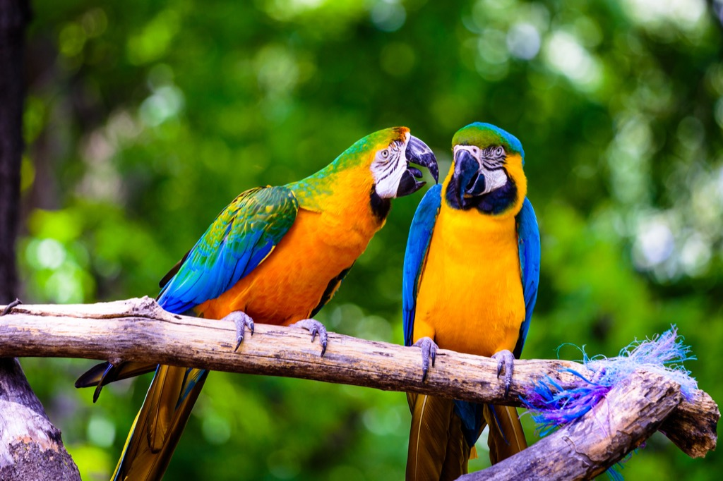 Two parrots outside Amazing Facts
