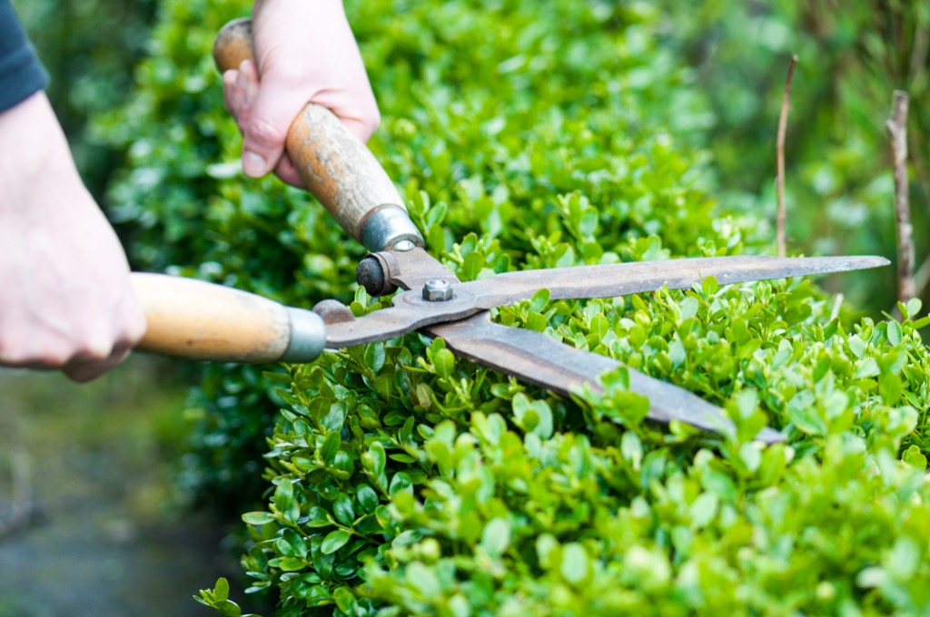 hedge clippers things burglars know about your home