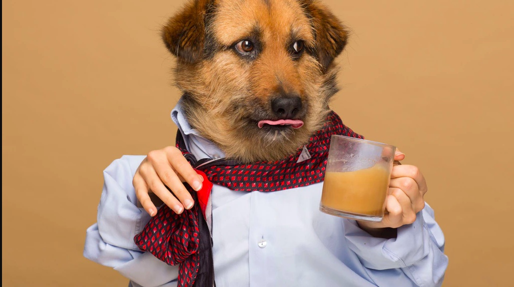 roofee coffee for dogs