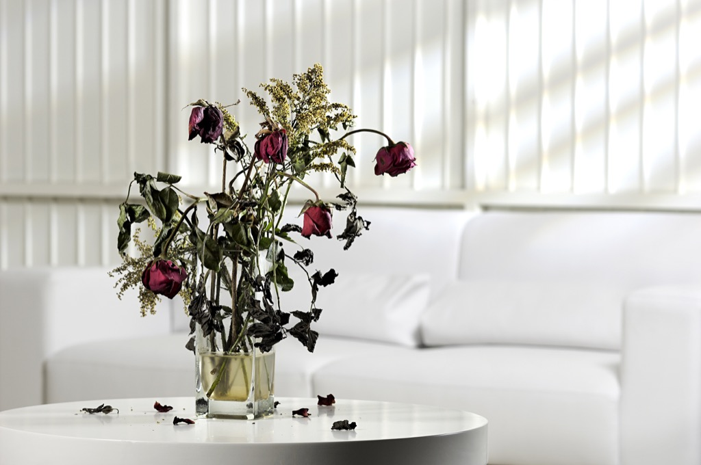 no woman over 40 should have dead flowers in her apartment