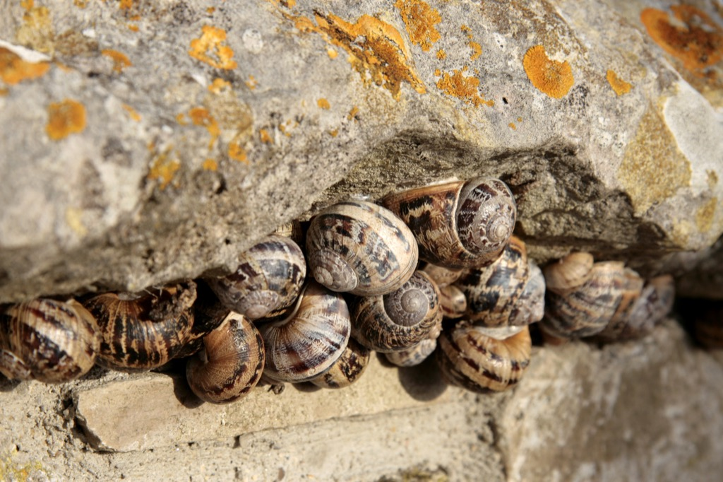 Group of snails awesome facts