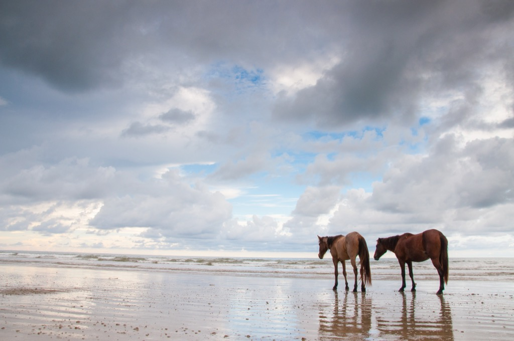 Assateague Island Beach maryland state natural wonders
