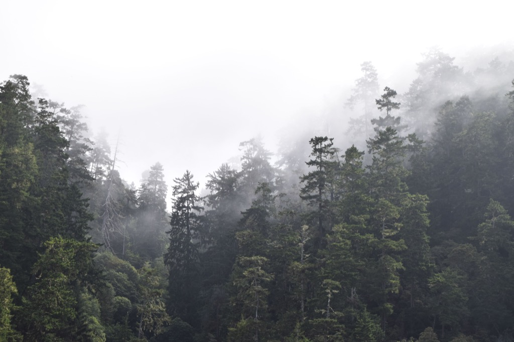 trees in fog {Scary Urban Legends}