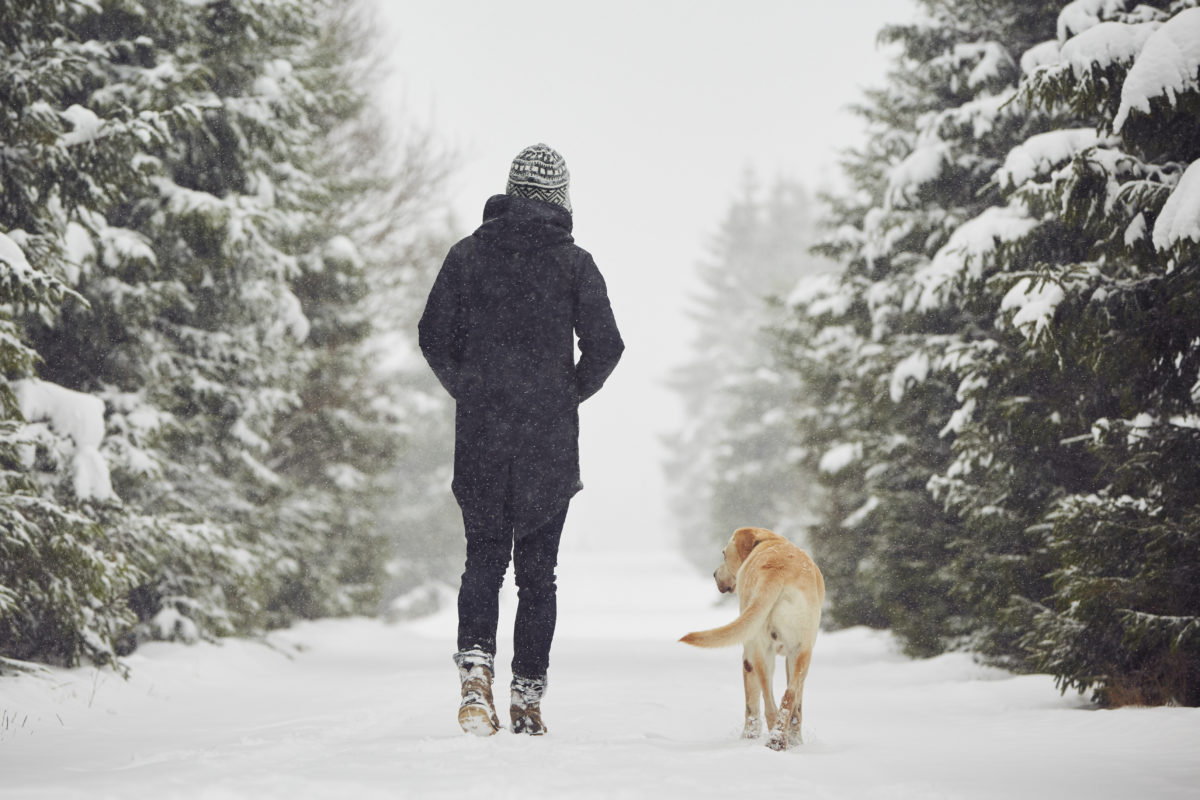 Walking in Winter