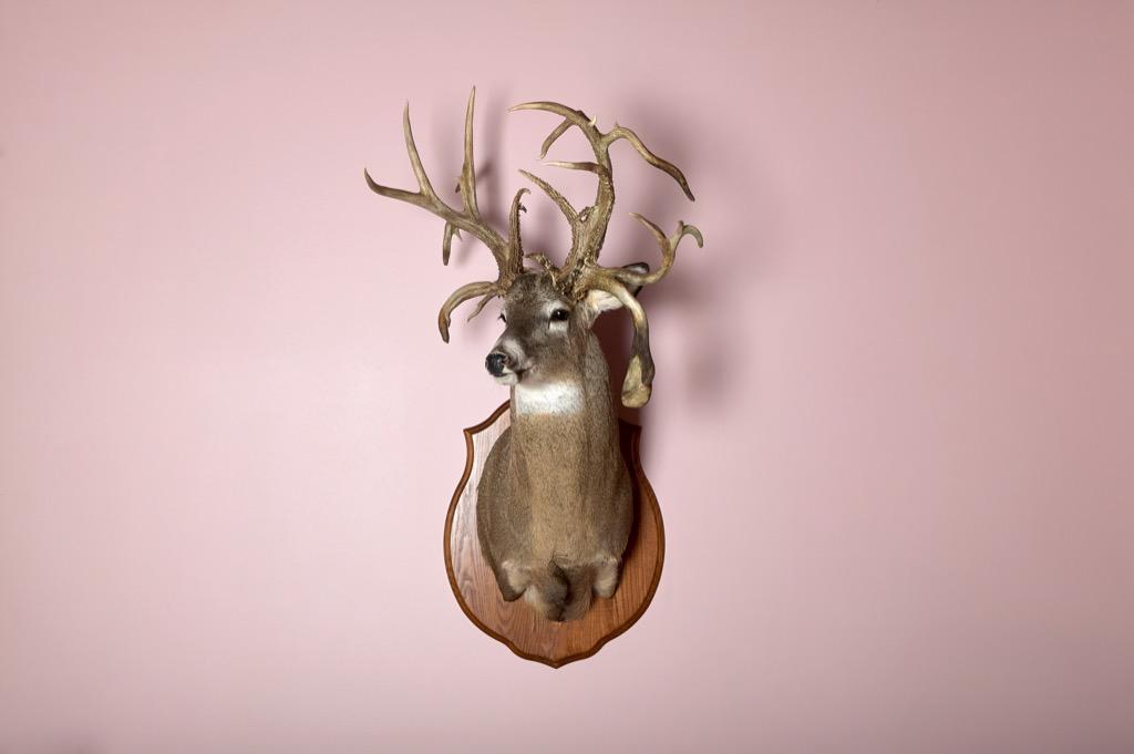 Taxidermy deer Head on Wal