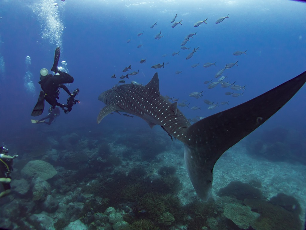 Shark Diving Best Birthday Gifts for Your Husband