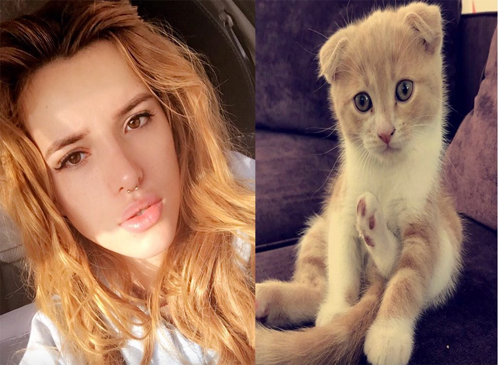Bella Thorne celebrities who look like their pets