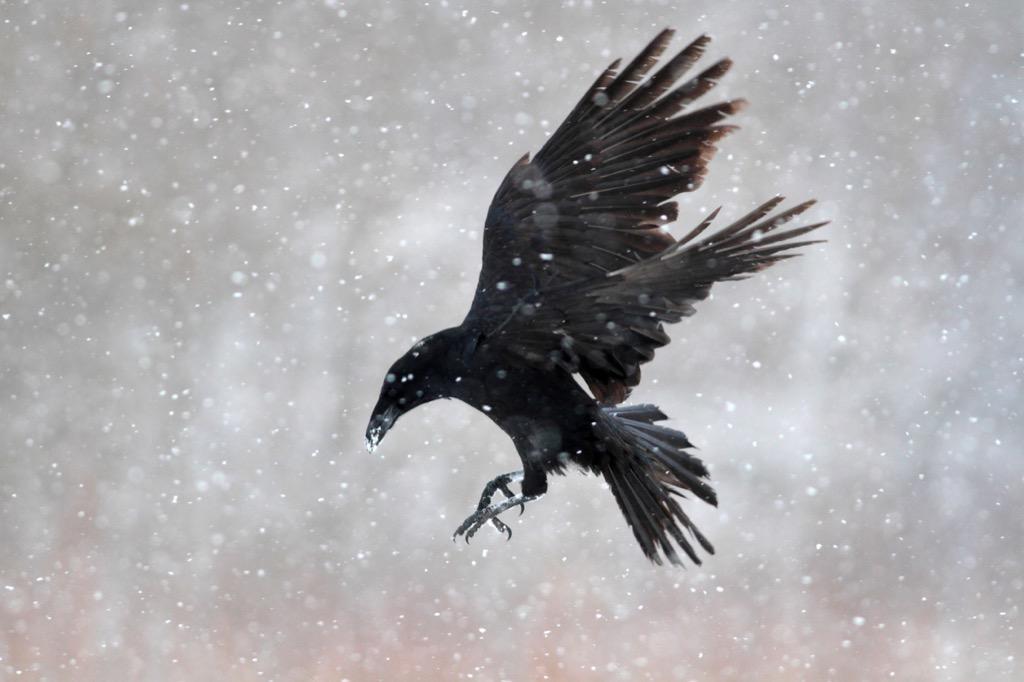 Crow Jokes children