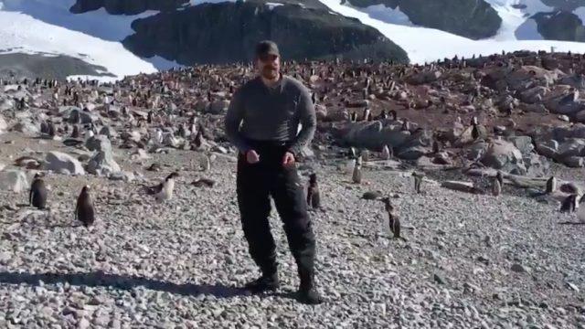 David Harbour dances with penguins in Antartica.