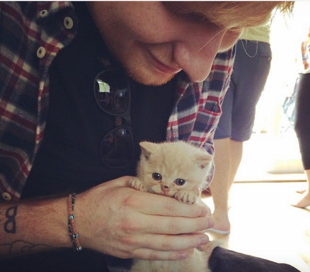 Ed Sheeran celebrities who look like their pets