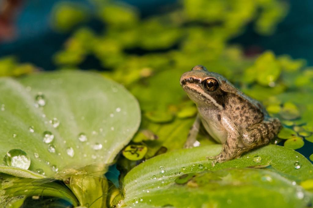 Frog Corny Jokes