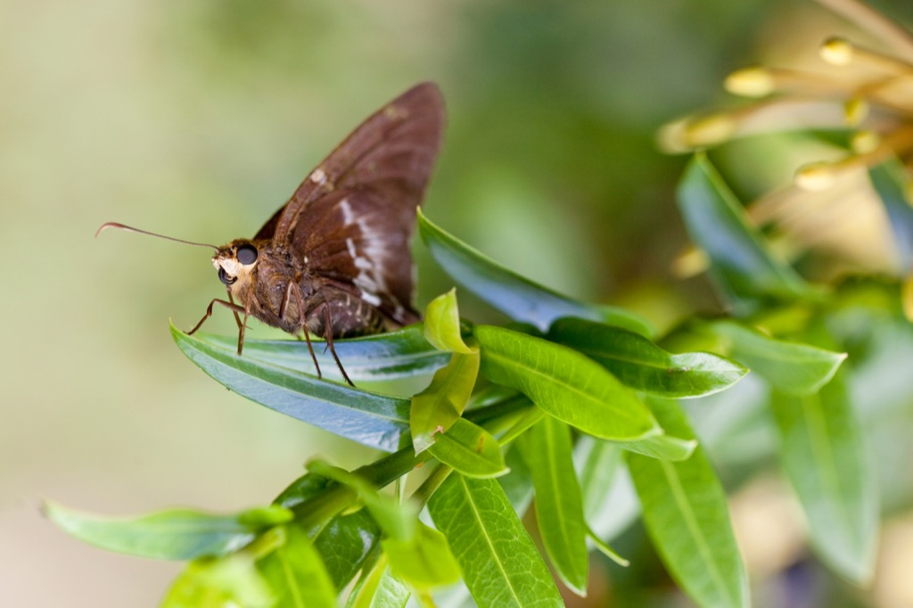 Brown moth outdoors