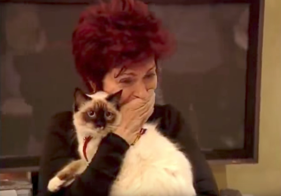 Ozzy Osbourne Stray Cat Reality Show