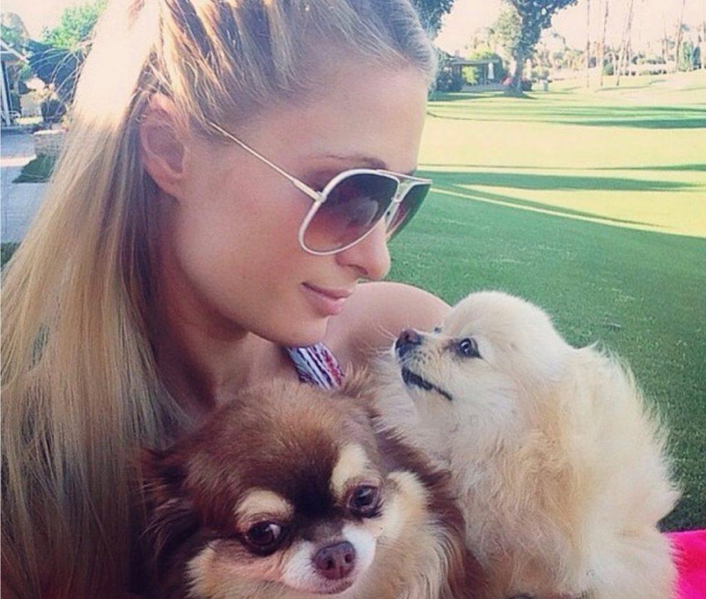 Paris Hilton celebrities who look like their pets