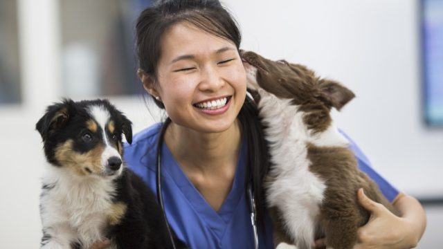 Vet with dogs