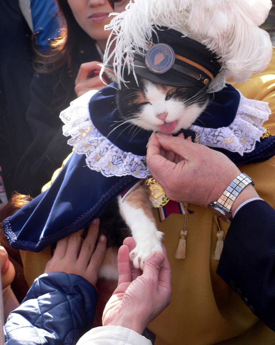 Cat stationmaster