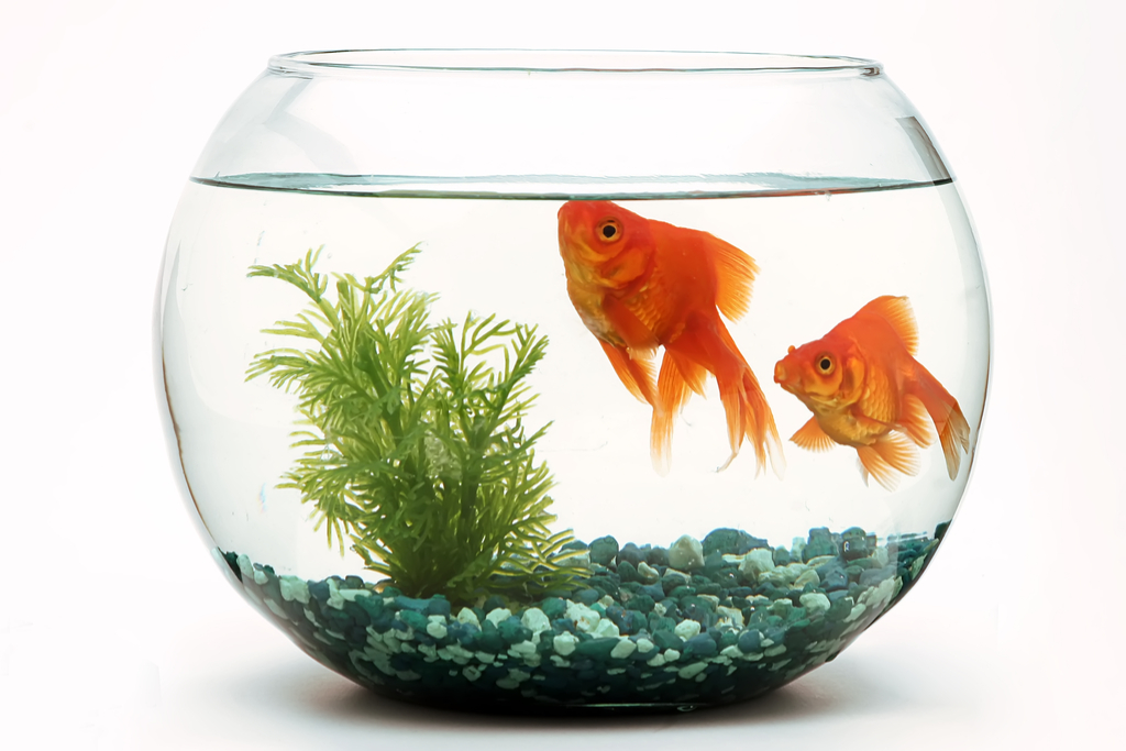 Gold Fish in Bowl Jokes children
