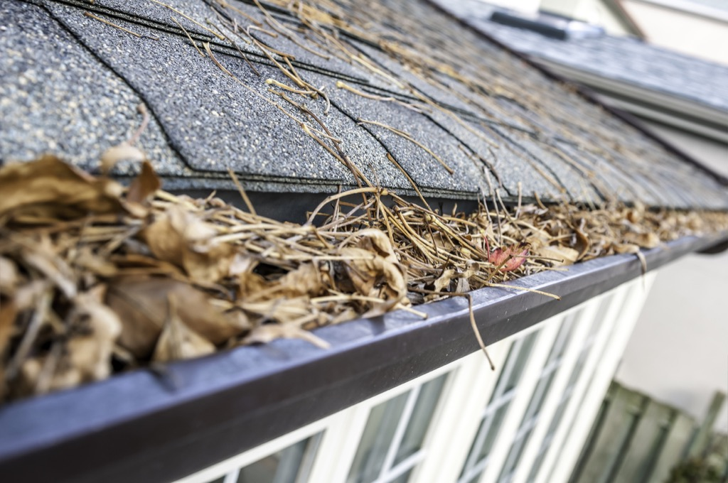 Gutter full of leaves things in your house attracting pests