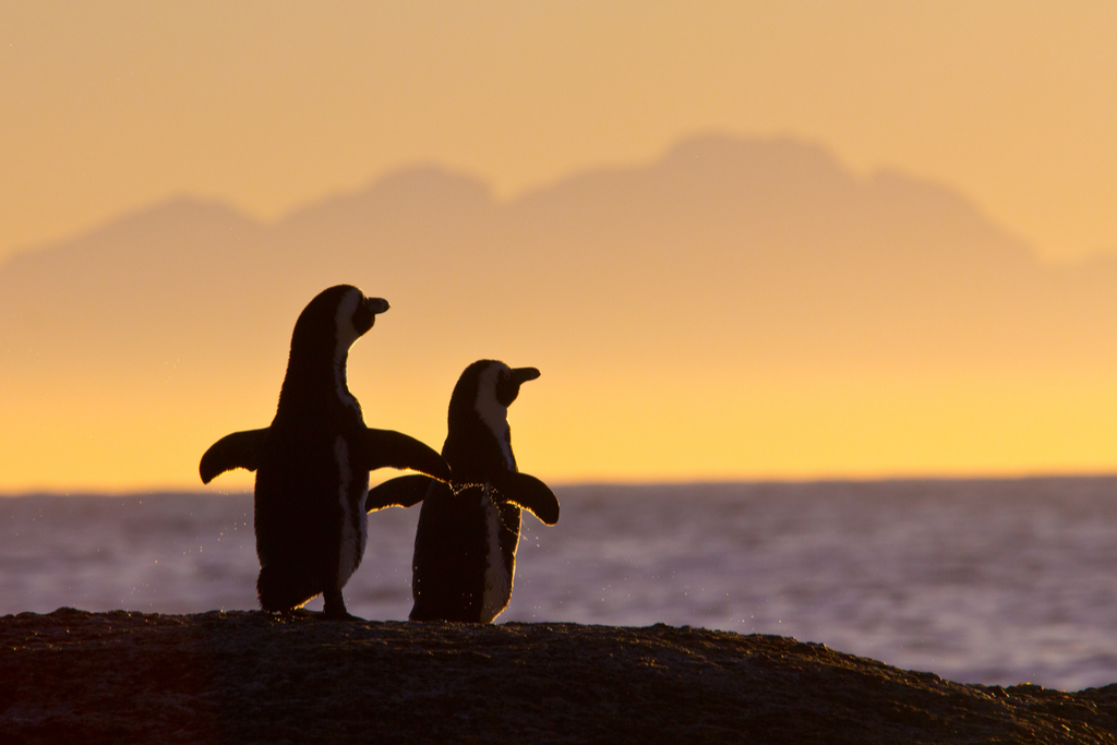 Penguin Couple Things You Believed That Aren't True