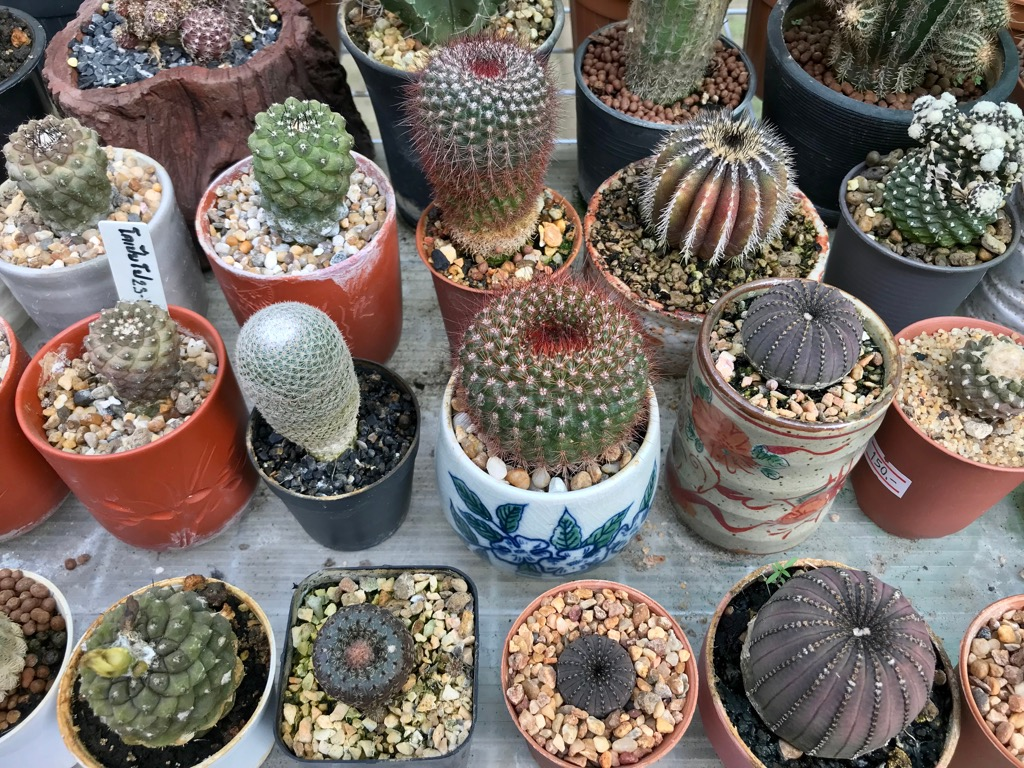 cactus Never Buy