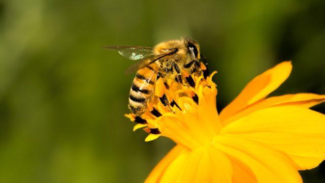 Bee Animal Jokes